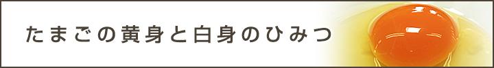 kotei_longimg02