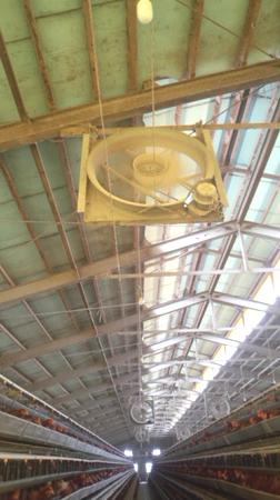 昔の味たまご農場鶏舎の扇風機