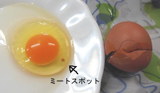初産卵・ミートスポットの玉子