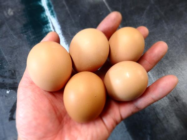 初産卵5個掌に